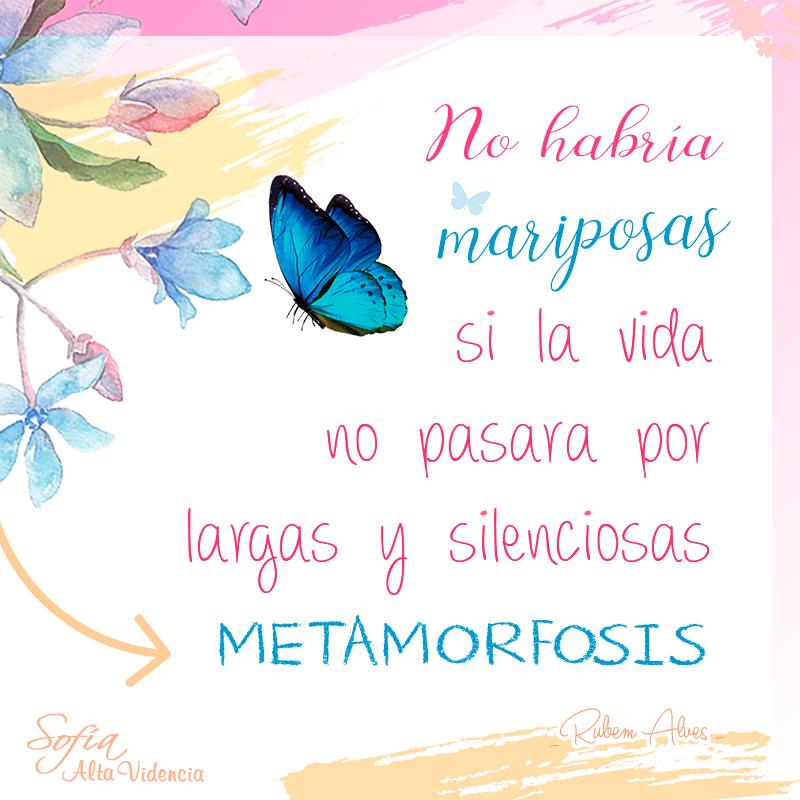 No habría mariposas si la vida no pasara por largas y silenciosas metamorfosis